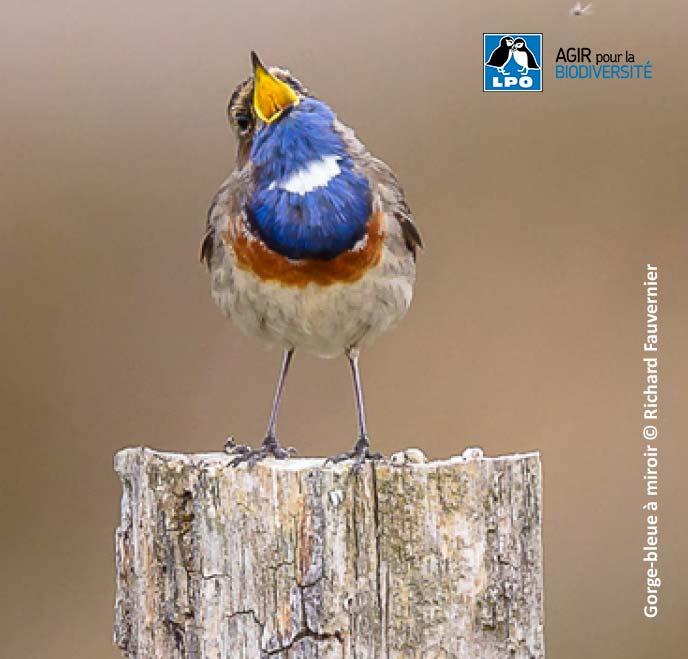 Initiation aux chants d'oiseaux à Mâlain